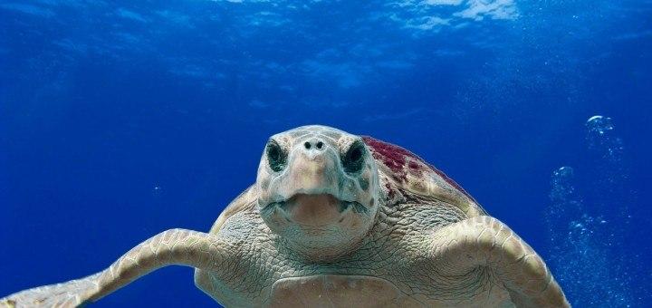 bundaberg turtle tours