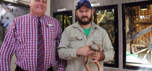 3 reptiles welcomed to Alexandra Park Zoo