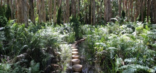 agnes waters paperbark forest boardwalk